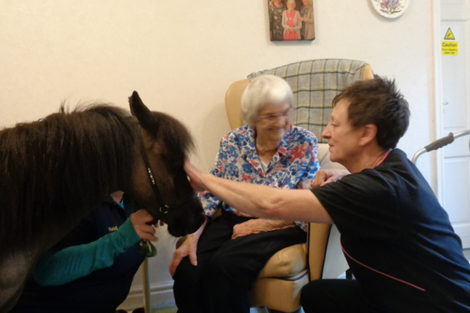 Miniature Therapy Horse